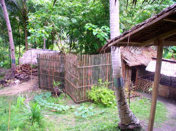 The finished chicken house/run. Chicken house has nipa roof and the chicken run has tall bamboo fences. The nipa roof on the leftmost is the landahan (copra-smoking house) and the little roof on the right is the old pig pen.