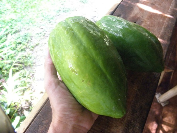 Green unripe papaya for the