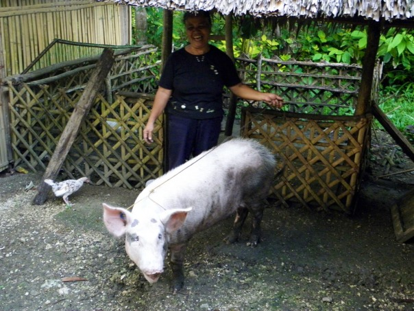 After six months, the piglet has grown to about 95 kilos and was butchered for town fiesta.