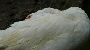 duckbath1