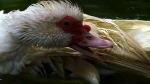 duckbath14