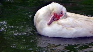 duckbath2